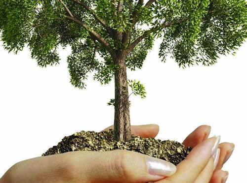 Adotta un albero con ADAMA